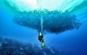 沙巴娱乐-黑珍珠潜水旅游中心
