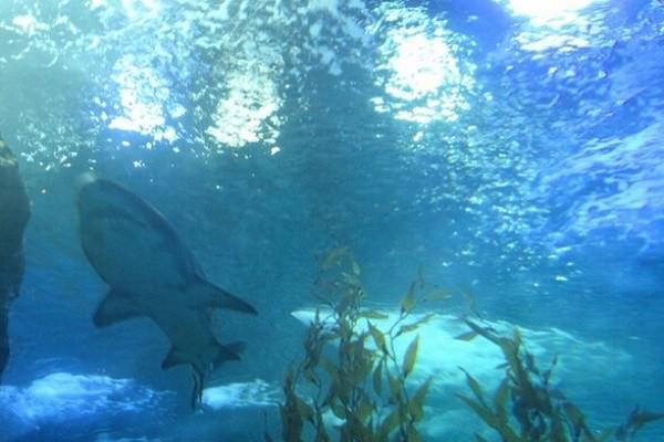 青岛的海底世界_青岛极地海洋世界和海底世界哪个好玩,有什么区别 - 马蜂窝