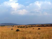 马赛马拉国家公园