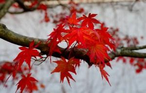 【富士山图片】日本赏红叶(富士山、箱根、东京第一次更新)