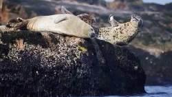 长岛景点-钓鱼岛海豹礁