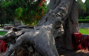 【运城图片】祭祖舜帝—李家大院—皇天后土—禹门激浪     运城之一