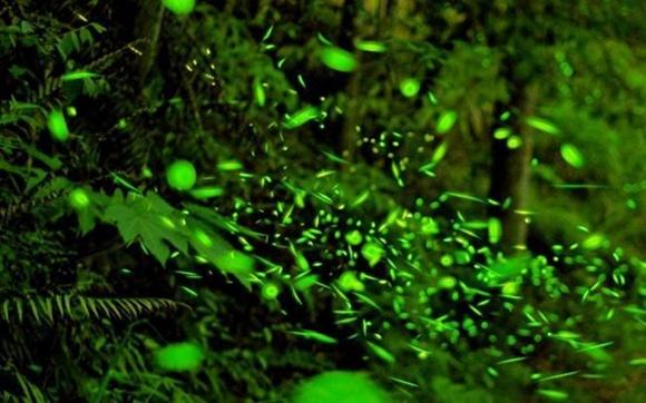 新加坡民丹岛红树林+萤火虫+奎笼海鲜餐 半日游 中文导游 酒店往返