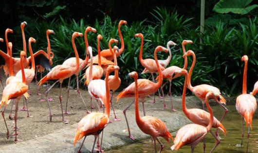 畅游三大动物园】 新加坡裕廊飞禽公园