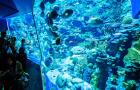 【双人巨优惠】香港海洋公园电子门票(含园内缆车/即订即用/特惠/可选小食亭餐券套餐)