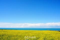 八月未央,带着清香与纯美,行走在青平温和的甘南时光里。