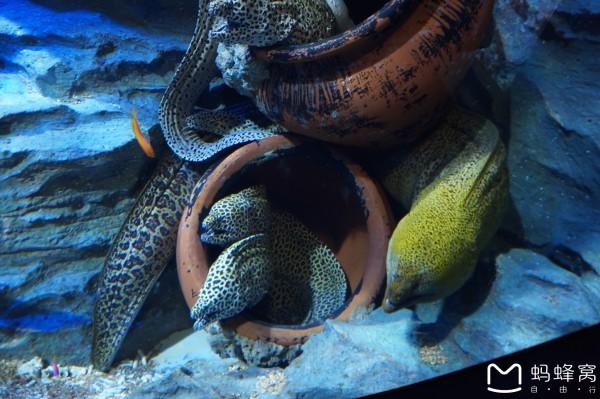 黄色的海鳝
