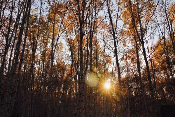 白桦林里除了姿态各异的白桦树,还有南瓜马车,秋千架,跷跷板,许愿井