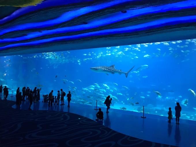 广州长隆野生动物园,珠海海洋王国,澳门6日游