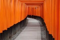 1516跨年の旅 ( 大阪 ‧ 神戶 ‧ 京都 ‧ 奈良 ‧ 姬路 )