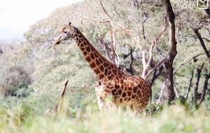 【马赛马拉国家公园图片】穿越肯尼亚的山和海——这个春节,带男友去东非见爸妈