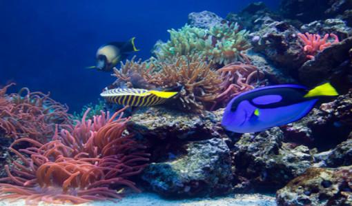 壁纸 海底 海底世界 海洋馆 水族馆 桌面 510_299
