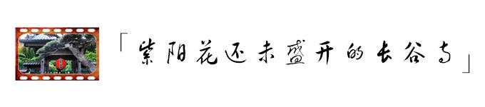紫阳花还未盛开的长谷寺