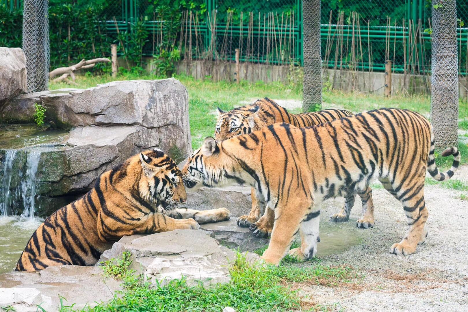Shanghai Wild Animal Park