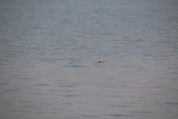 自驾鄱阳湖 探索五大河流归宿之旅 旅游攻略 五五户外
